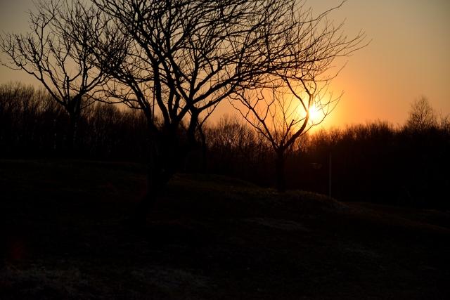 森の夕暮れ