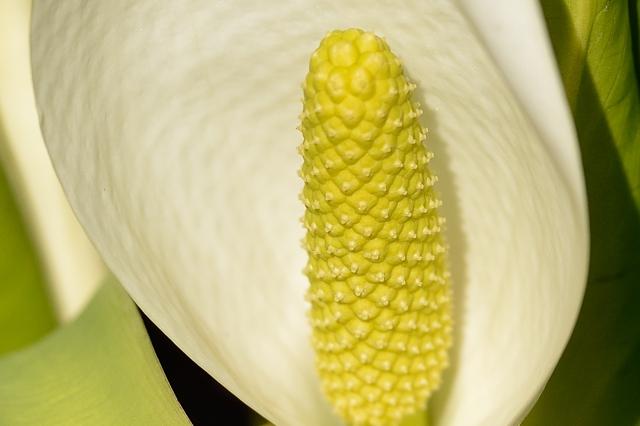 春の植物13
