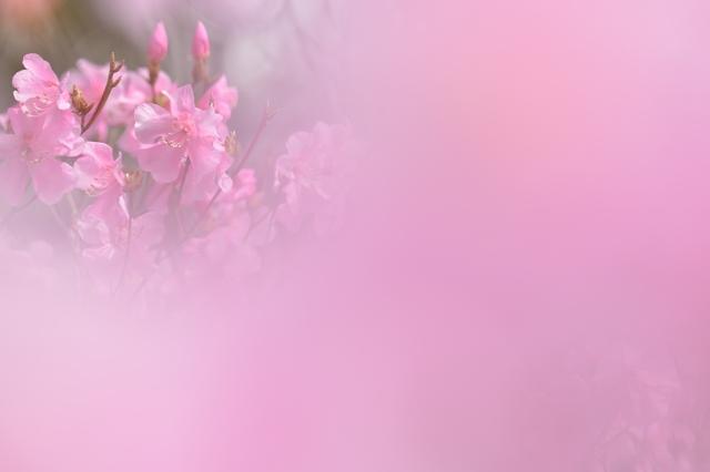 春の庭園2