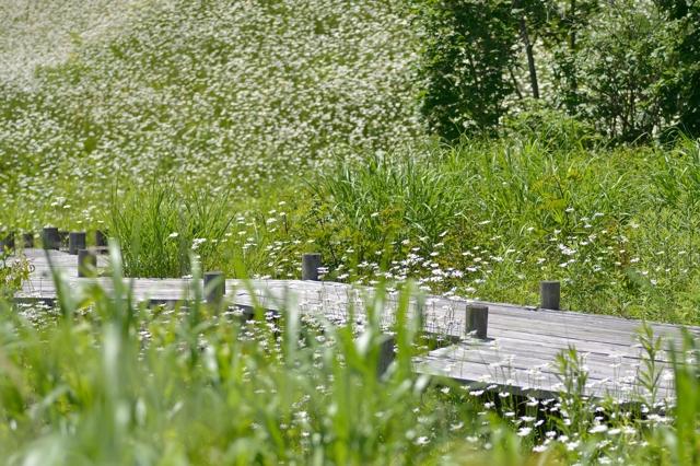 滝ノ上公園3