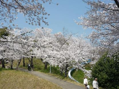 桜2014 2