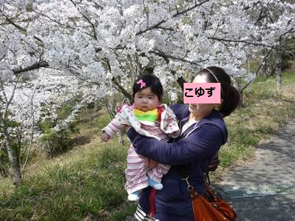 桜2014 3