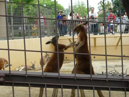 動物園14-2