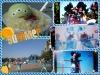 2014-07-16_165030decr.jpg