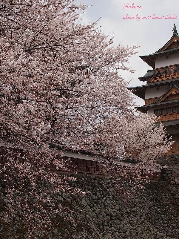 桜とさくらあんぱん1