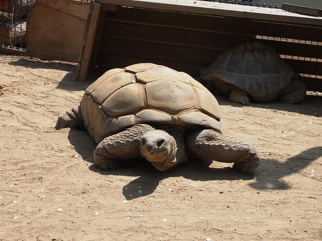 GW動物園5