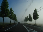 雨上がりの朝は、こんな感じで素敵!