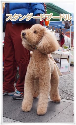 大型犬3s