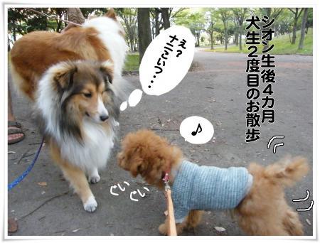 大型犬7s