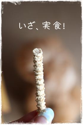 かめっちさん9s