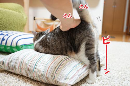 トントン三角形なネコ