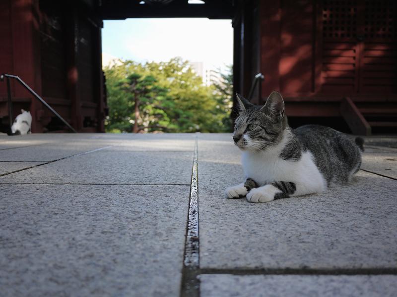 赤い門のネコ