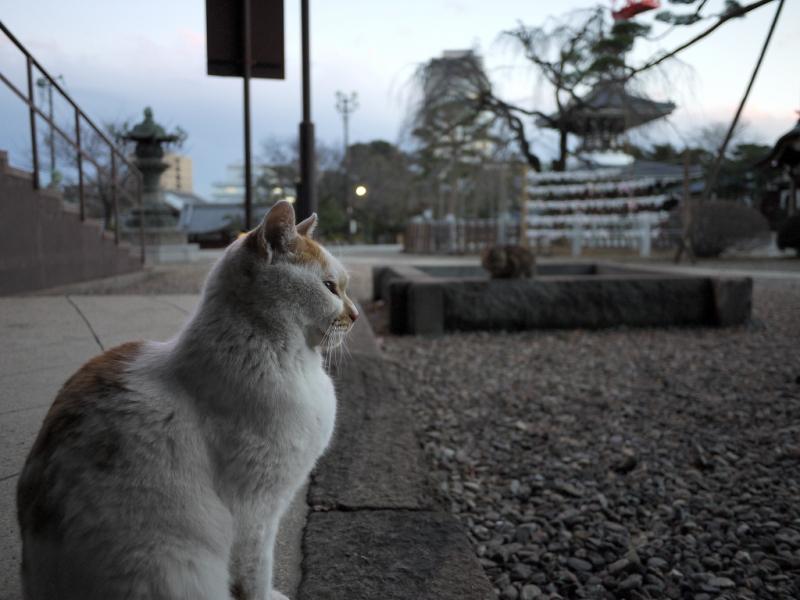 境内に佇む友だちネコの姿