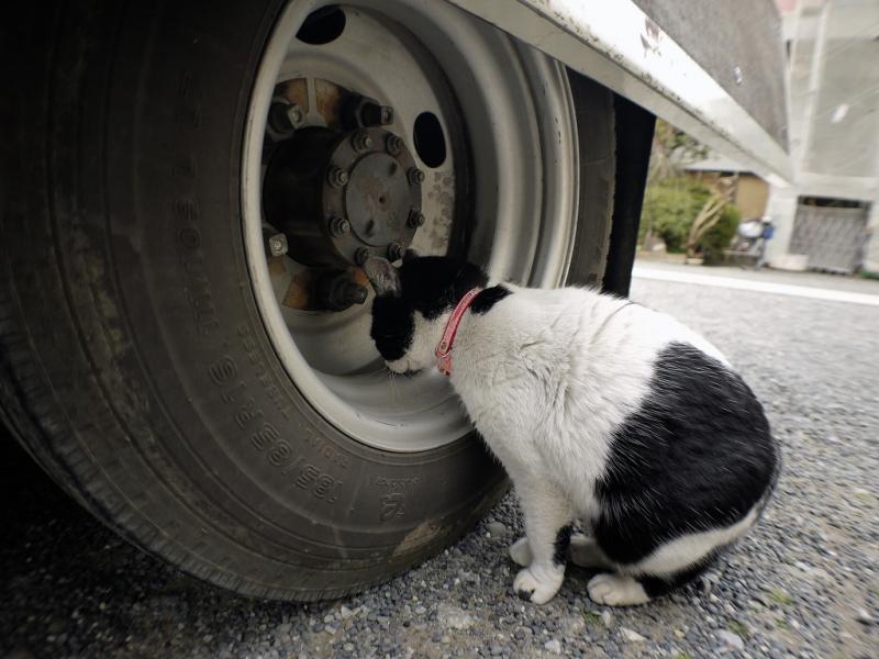 トラックのタイヤホイールを嗅ぐネコ
