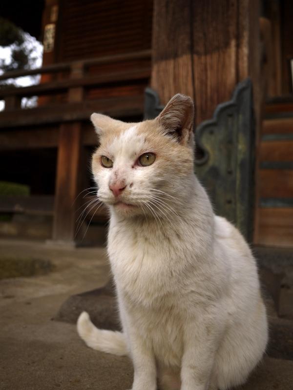 お堂の前の友だちネコ