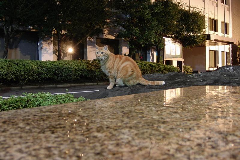 夜景モードで撮ったネコ