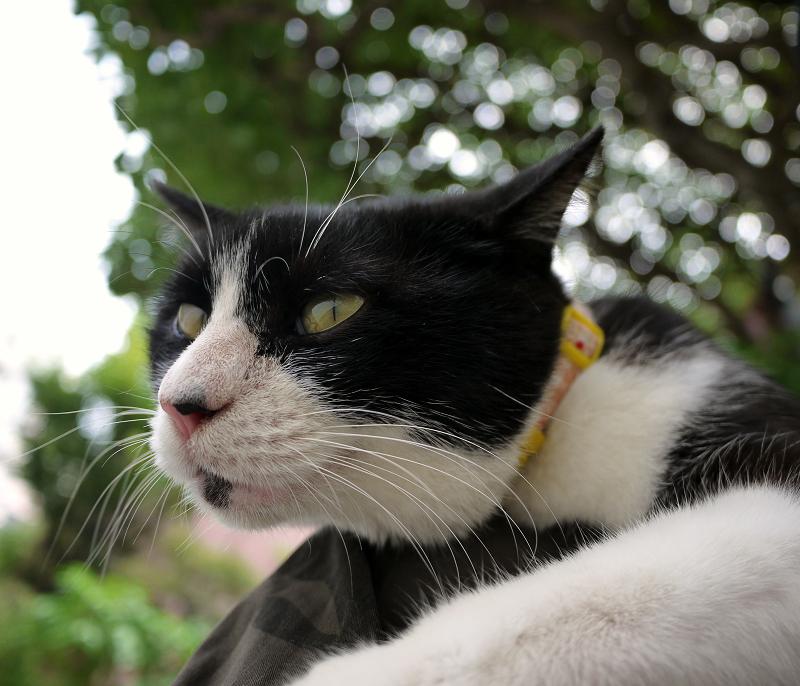 膝に乗ったオッサン顔のネコ