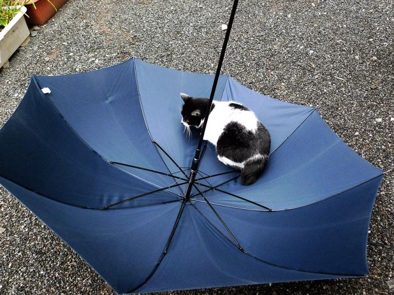 紺色の傘に乗ってるネコ
