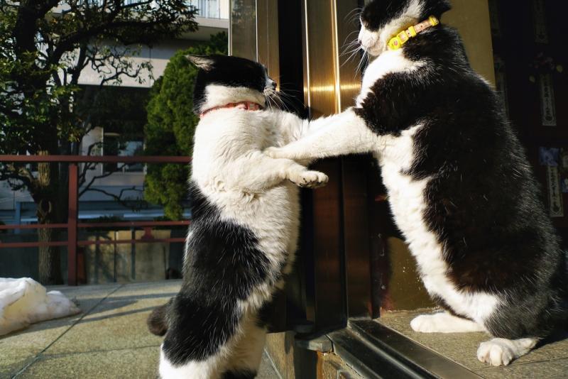 お堂の前でパンチを繰り出す義理姉妹ネコ