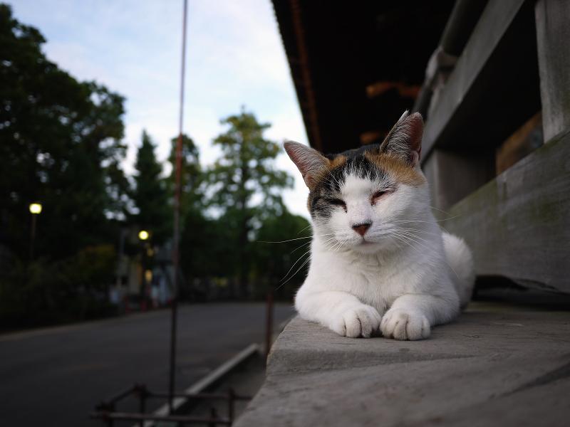 濡れ縁外側のネコ