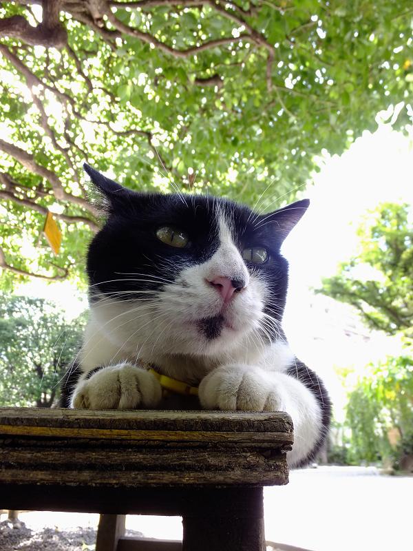 ベンチのネコ