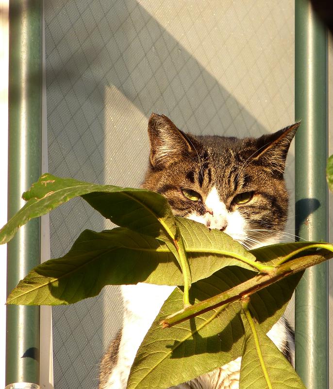 ベランダの葉影から睨むネコ
