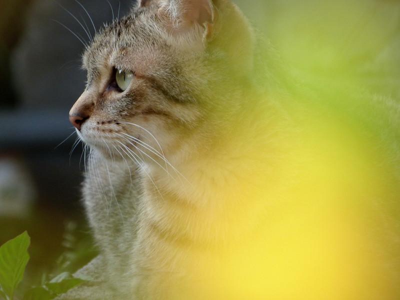 黄色い葉陰の向こうのネコ