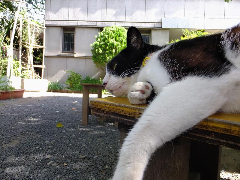 ベンチで脱力ネコ