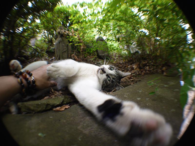 広角で手を伸ばすネコ
