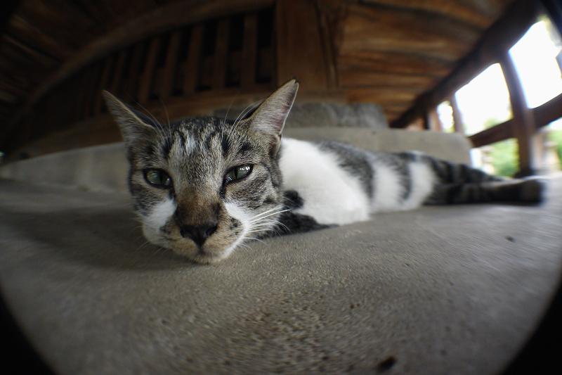 縁の下の広角ネコ
