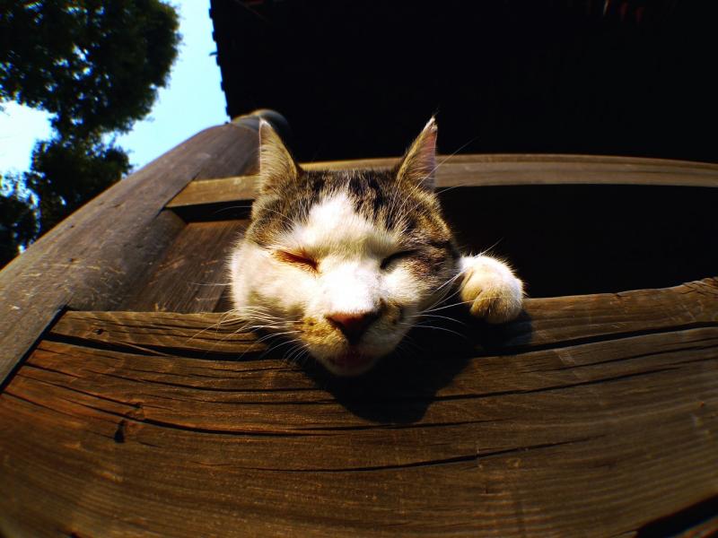 欄干から顔を出すネコ
