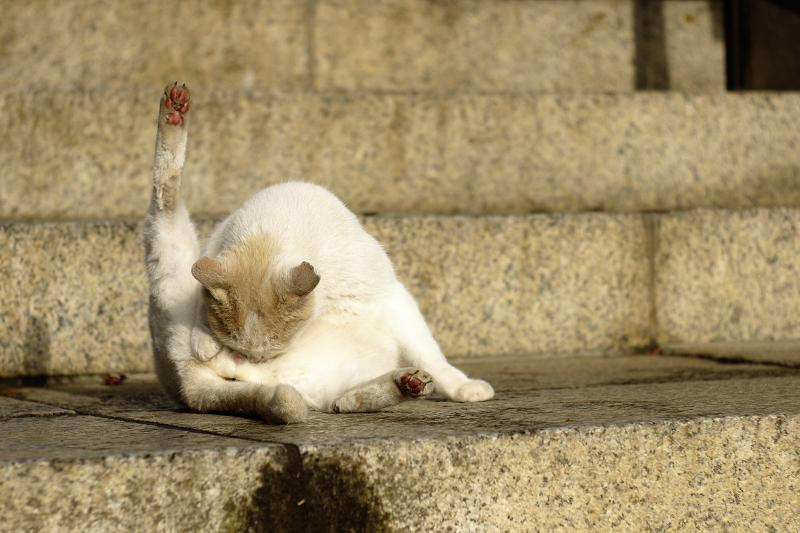 朝日に肉球を向けてるネコ