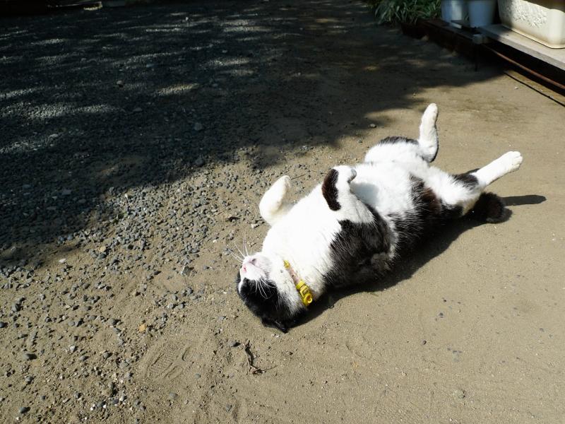 仰向けになって冬の陽射しを受けてるネコ