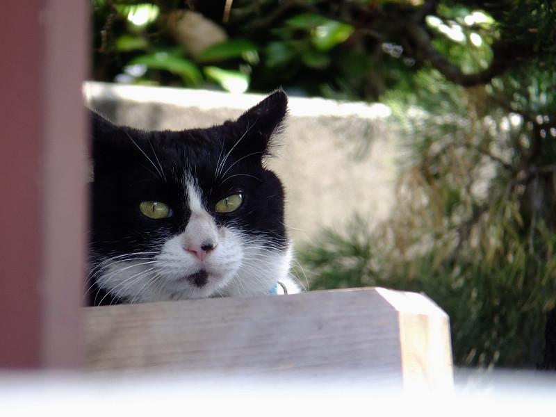 柱の影から見てるネコ