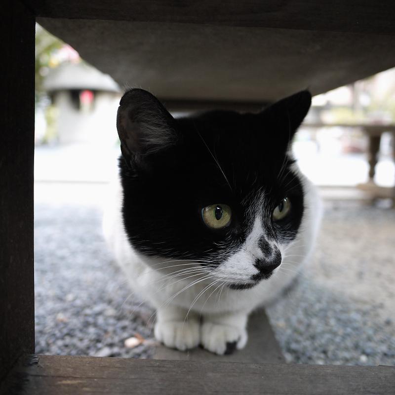 ベンチの下から外を見てるネコ