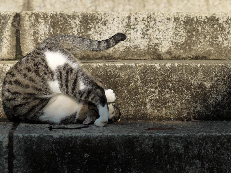 階段で回転してるネコ