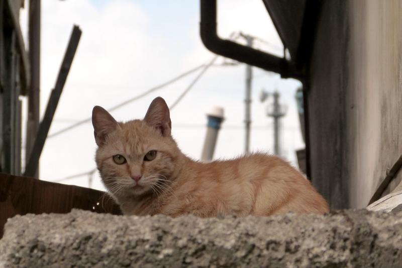 古い町のネコ