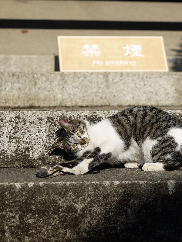 ネズミ目線で遊んでるネコ