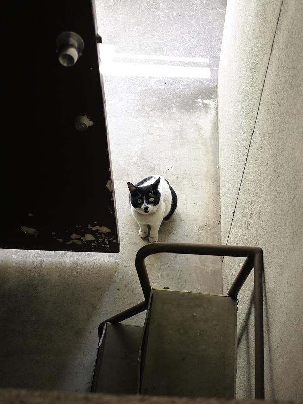 見上げる猫をハイアングルで