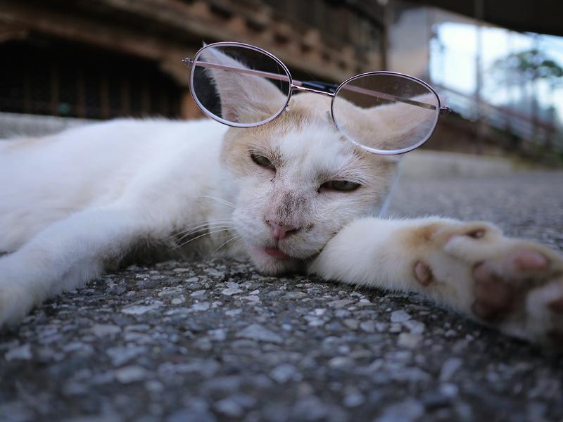 眼鏡を掛けてる猫