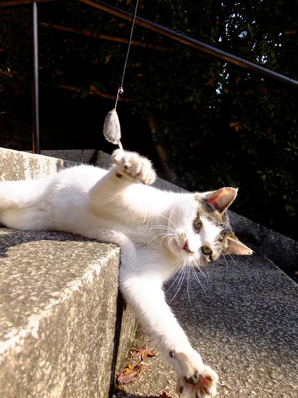 階段から落ちそうなネコ