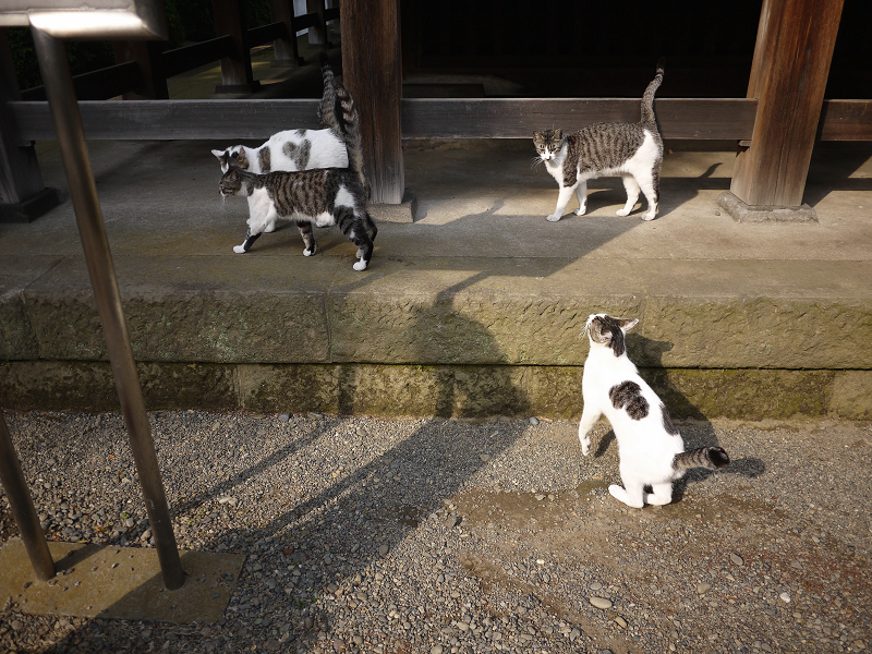 1匹足りない若猫たち