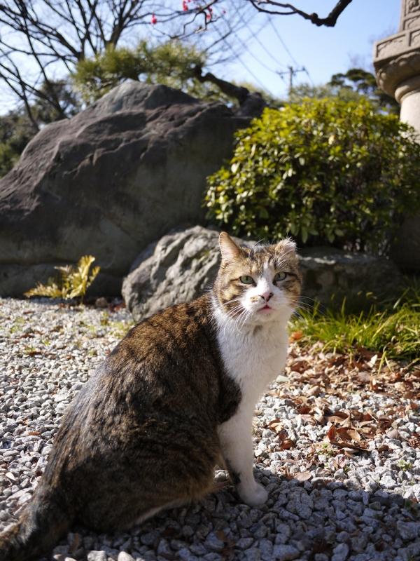 石庭のネコ