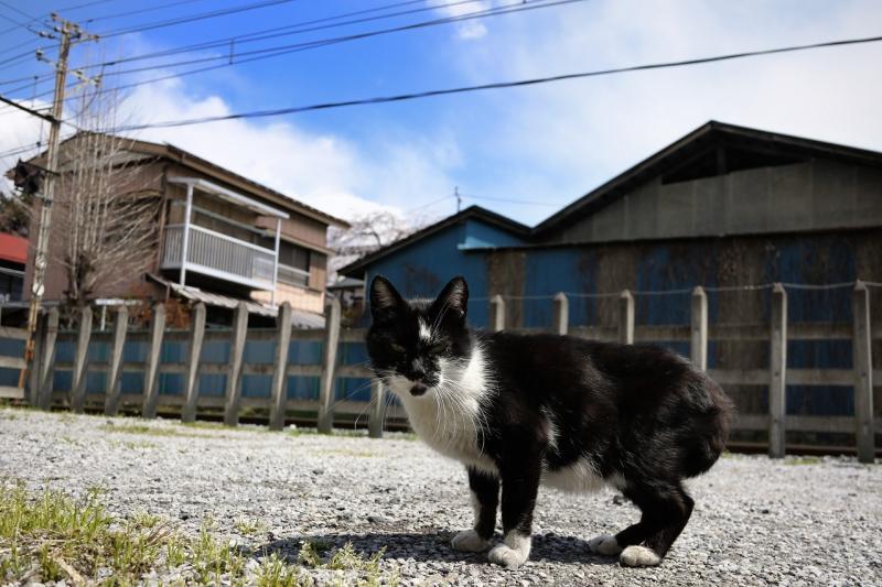 線路脇の空き地のネコ