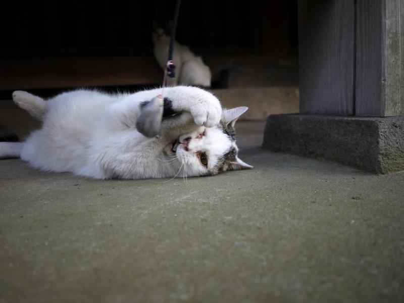 横になってネズミを捕まえるネコ
