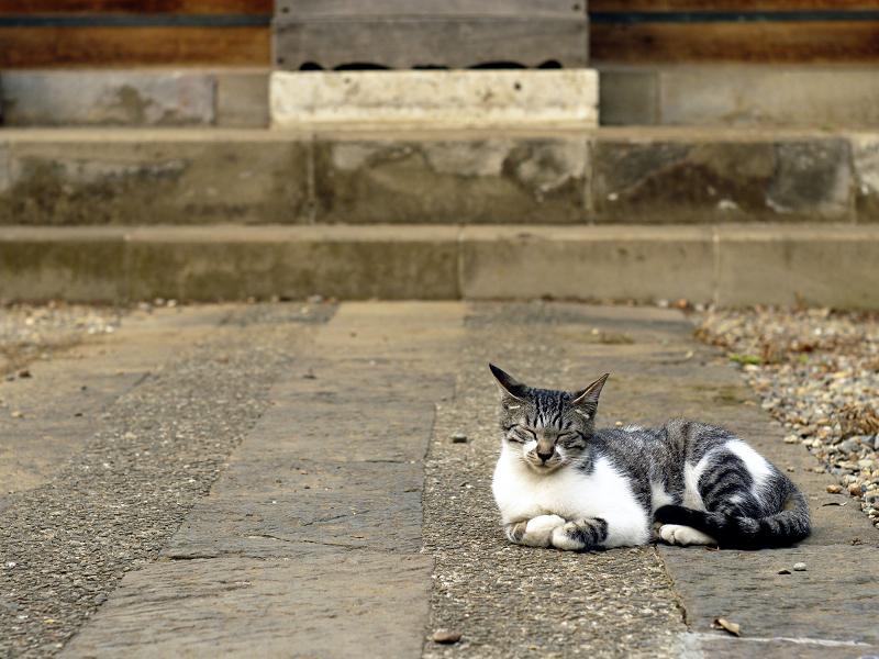 お堂の参道のネコ