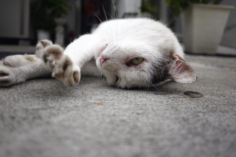 寝ながら伸びをするネコ