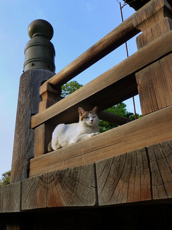 濡れ縁の擬宝珠のネコ
