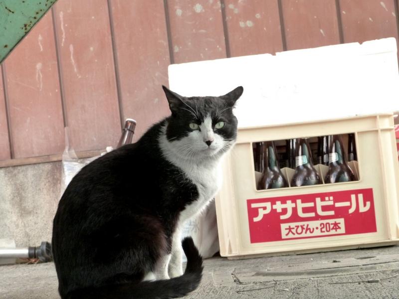 アサヒビールの空き箱とネコ