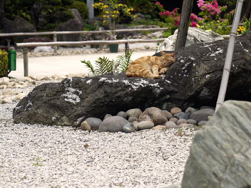 石庭で休憩中のネコ